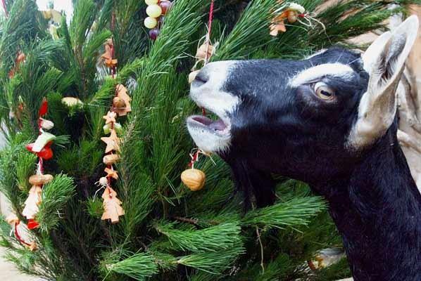 &;φάει&; το χριστουγεννιάτικο δέντρο
