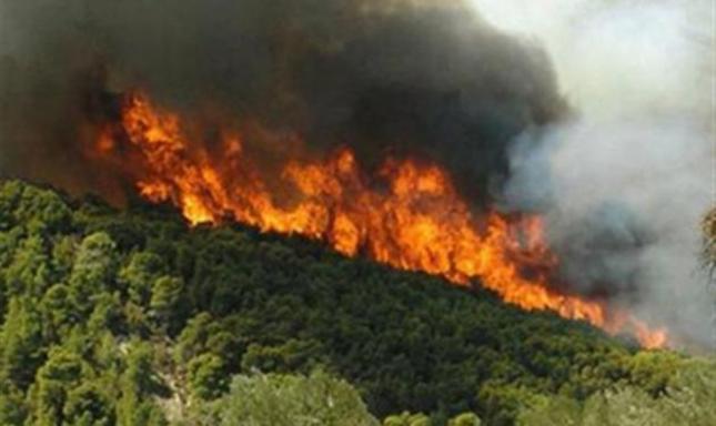 Πυρκαγιά στον Κουβαρά Αττικής  - ΤΩΡΑ
