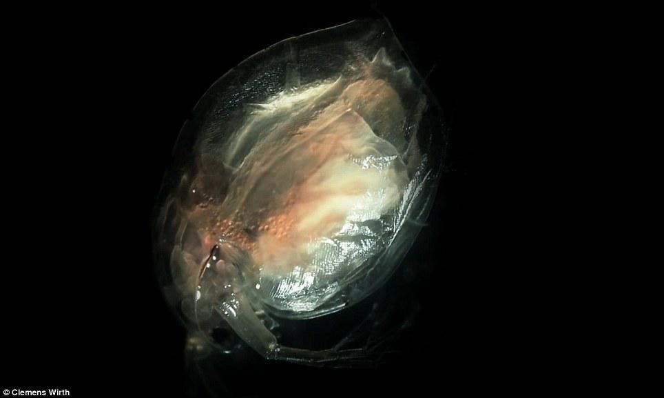 diaforetiko.gr : terataki6 Αυτά τα τέρατα είναι μέσα στο νερό που πίνουμε. Σοκάρουν οι φωτογραφίες από μικροσκόπιο