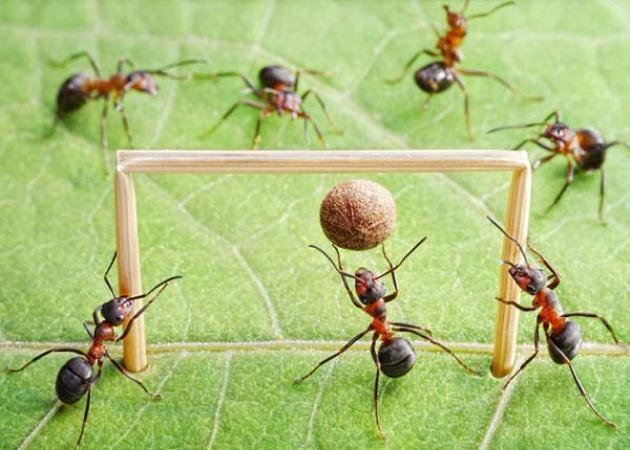 Αποτέλεσμα εικόνας για μυρμήγκια σπίτι