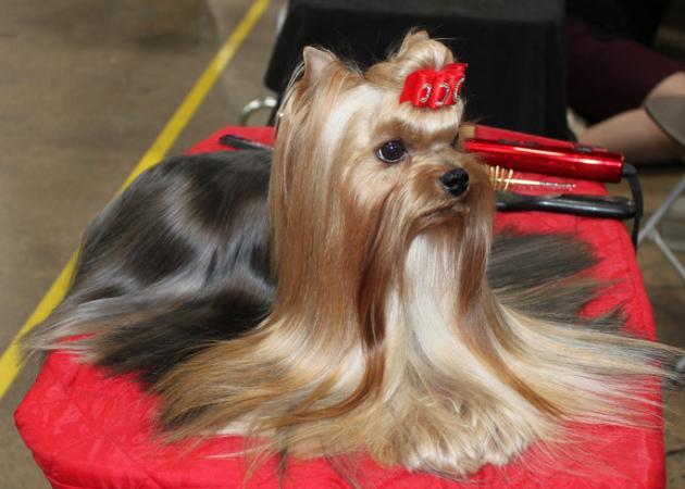 Αυτός ο σκύλος έχει πιο τρελό beauty routine από το δικό σου!