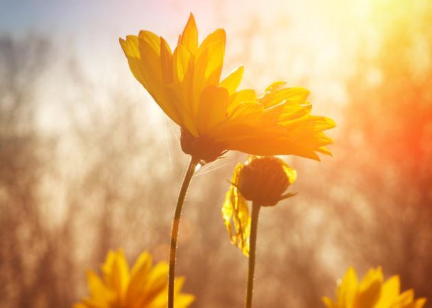 ΜΗΝΙΑΙΕΣ ΠΡΟΒΛΕΨΕΙΣ – Μάιος 2016: Πώς θα είναι ο μήνας σου σύμφωνα με το ζώδιό σου;