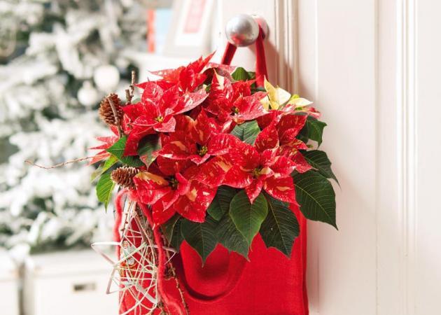 Χριστουγεννιάτικη διακόσμηση: Δώσε πολυτελή όψη στο χώρο σου με Αλεξανδρινά! | tlife.gr