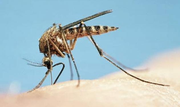 Από τι κινδυνεύουμε όταν μας τσιμπήσει κουνούπι; | tlife.gr