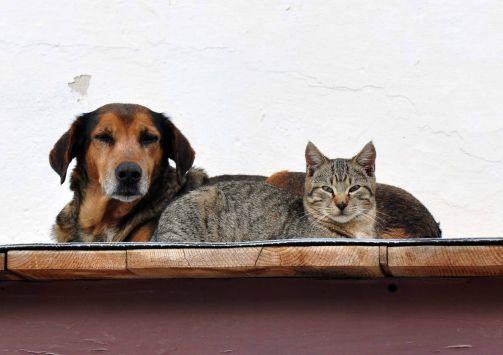 Απαγορεύεται να γαβγίζουν οι σκύλοι! | tlife.gr
