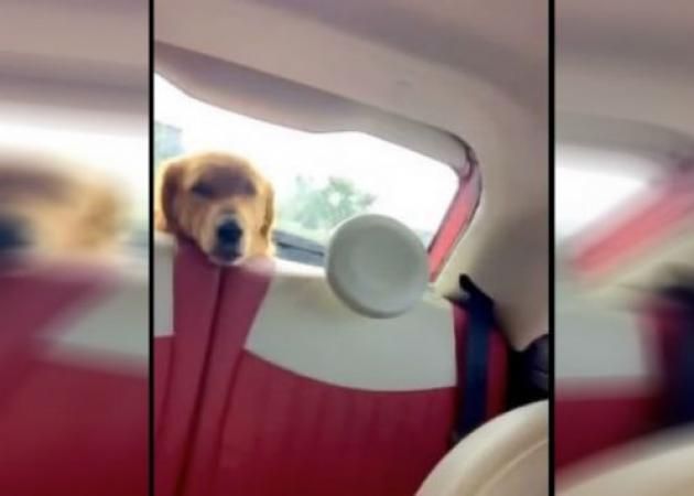 Όταν δεις τι τρομάζει αυτό τον σκύλο, θα βάλεις τα γέλια!
