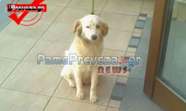 Πρέβεζα: Σκυλίτσα μπήκε στο φέρετρο μαζί με το αφεντικό της…