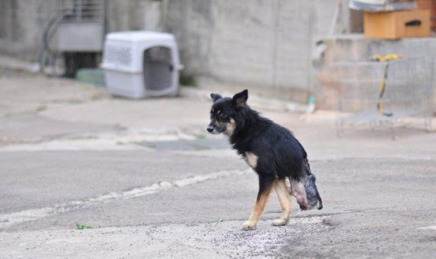 Συγκλονιστικές φωτογραφίες από διάσωση αδέσποτου! | tlife.gr
