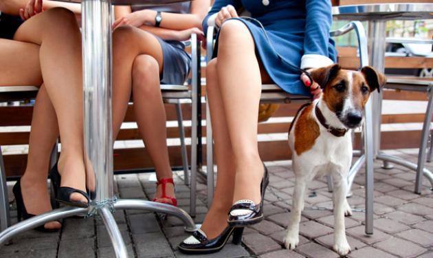 Γιατί όταν τρώμε οι σκύλοι γυροφέρνουν το τραπέζι μας;   tlife.gr