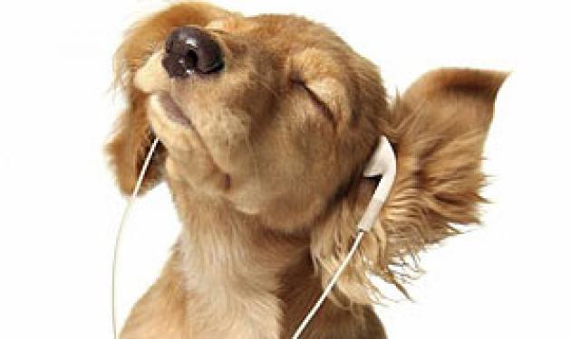 Συναυλία για… σκύλους! | tlife.gr