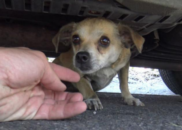 Αυτή η σκυλίτσα είχε χαθεί στην πόλη – Το σχέδιο διάσωσης και η στιγμή που είδε το αφεντικό της