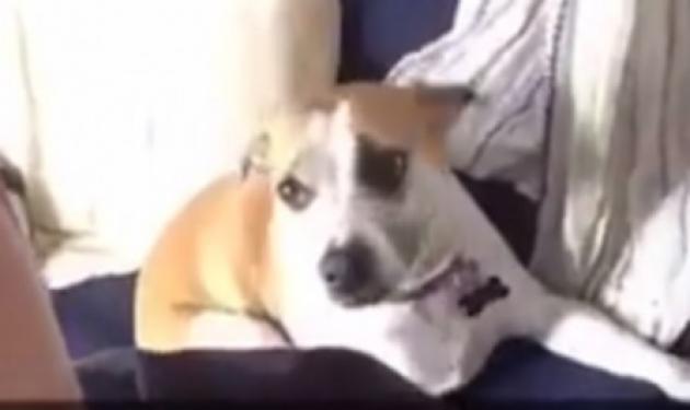 """""""Τρέλα"""" στο internet με το σκυλί που παλεύει για μία selfie"""