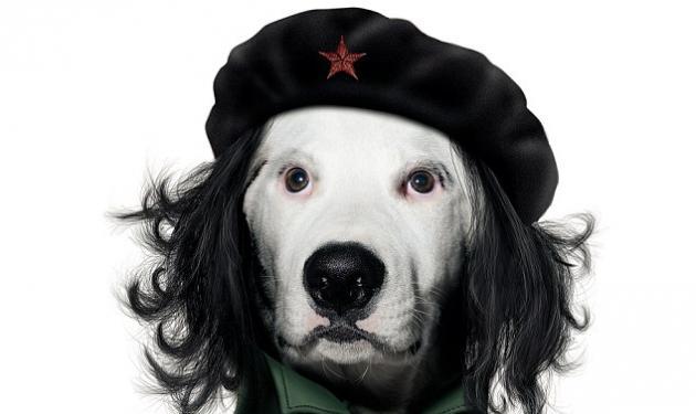 Ένας σκύλος στη θέση του Τσε προκαλεί αντιδράσεις! | tlife.gr