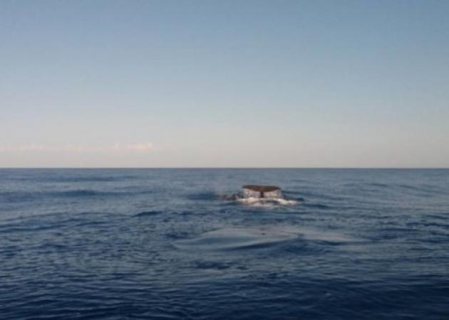 Φάλαινες πλατσούριζαν στα Χανιά! Βίντεο