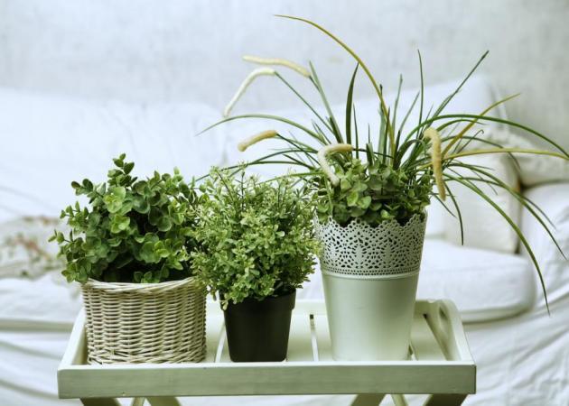 Διακόσμηση: 8 φυτά που θα ομορφύνουν το υπνοδωμάτιό σου και θα διευκολύνουν τον ύπνο σου!   tlife.gr