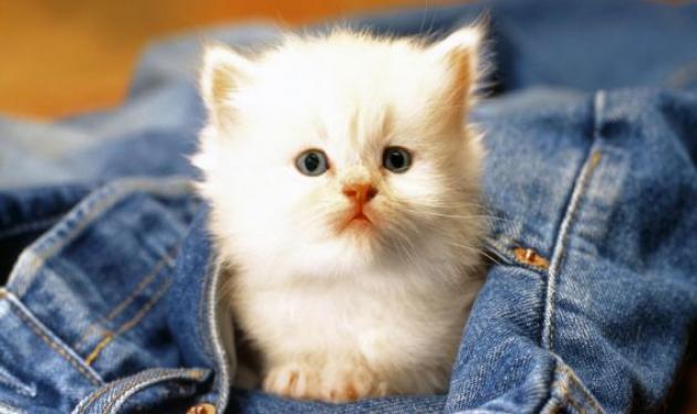 Γατάκι, πλύθηκε στο πλυντήριο και βγήκε ζωντανό!   tlife.gr