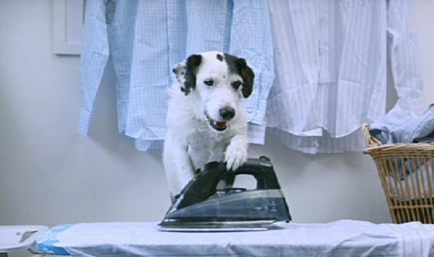 Ο σκύλος που κάνει όλες τις δουλειές! Δες το ξεκαρδιστικό βίντεο | tlife.gr
