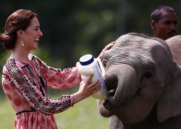 Kate Middleton: Πήρε το μπιμπερό να ταΐσει ελεφαντάκι! Απίστευτες φωτογραφίες | tlife.gr