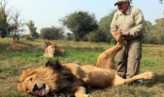 Και τα λιοντάρια θέλουν το μασάζ τους! | tlife.gr