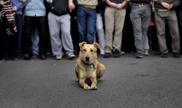 Ο σκύλος που πάει στις πορείες! | tlife.gr