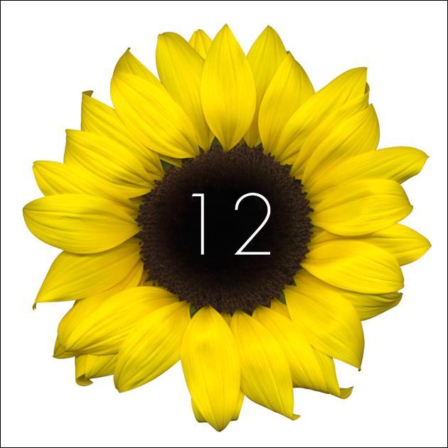12   Sunflower