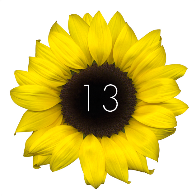 13   Sunflower