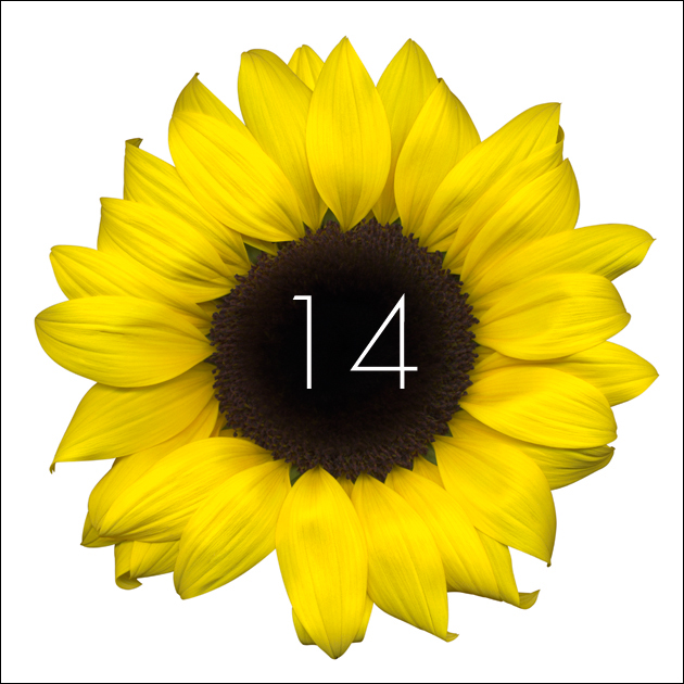 14   Sunflower