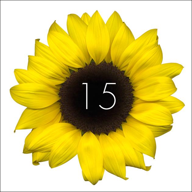15   Sunflower