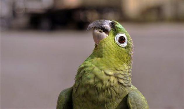 Μεθυσμένοι παπαγάλοι πέφτουν από τον ουρανό! | tlife.gr