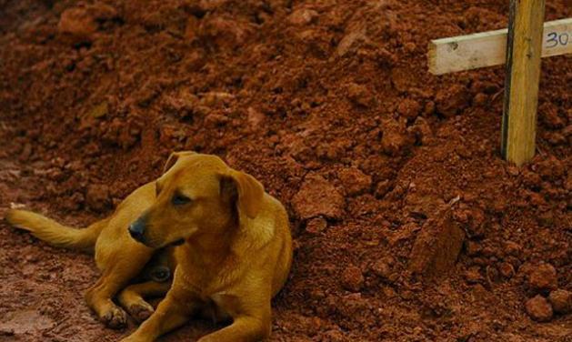Ο σκύλος που αρνείται να φύγει από τον τάφο της αφεντικίνας του! | tlife.gr