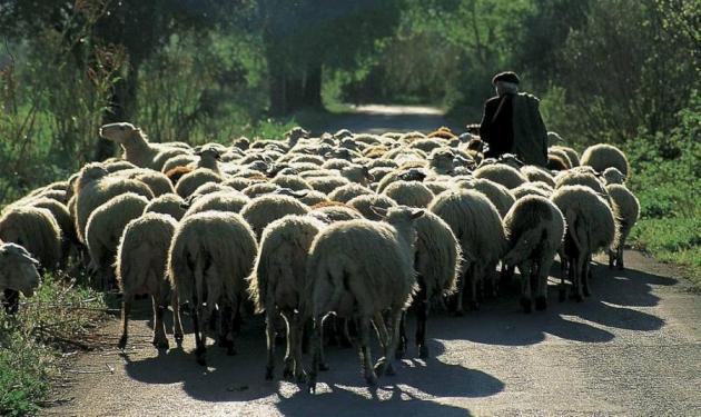 Με φώτα πορείας και τα πρόβατα με απόφαση Α. Πάγου! | tlife.gr