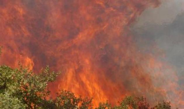 Φωτιά ξέσπασε στη Σαλαμίνα! | tlife.gr