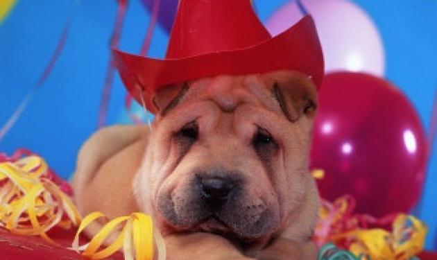 Κάνε και συ ένα «παιδικό» πάρτυ στον σκύλο σου!   tlife.gr