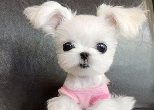 Θα… λιώσεις! Αυτός είναι ο πιο χαριτωμένος σκύλος στον κόσμο!