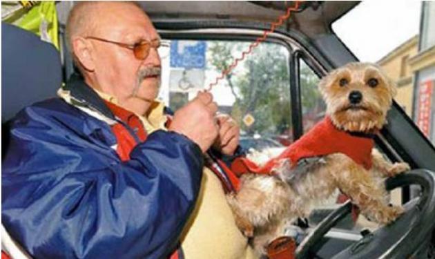 Σκύλος »οδηγεί» taxi! | tlife.gr