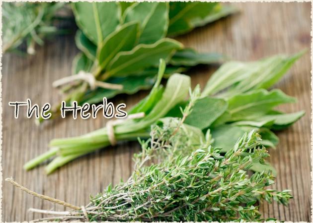 ΥΓΕΙΑ! 15 βότανα για να προσφέρεις στον οργανισμό σου τόνωση και ευεξία | tlife.gr