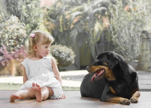 Σκύλος στο σπίτι: Τι πρέπει να προσέχεις ώστε να πετύχει η σχέση με το παιδί σου