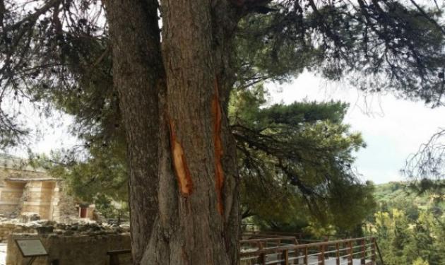 Σε κρίσιμη κατάσταση η 30χρονη που χτυπήθηκε από κεραυνό στην Κνωσό | tlife.gr
