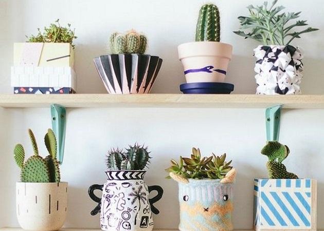 Καθάρισε την… ατμόσφαιρα: Πέντε φυτά εσωτερικού χώρου που θα ανανεώσουν τον αέρα του σπιτιού σου | tlife.gr