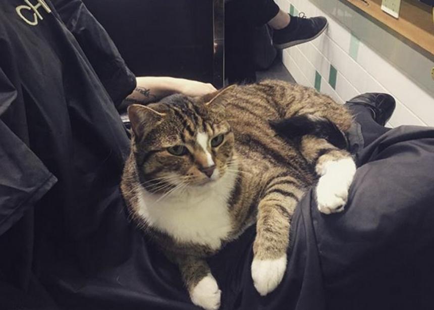 Αυτή η γάτα εργάζεται σε κομμωτήριο και δες τι κάνει! | tlife.gr