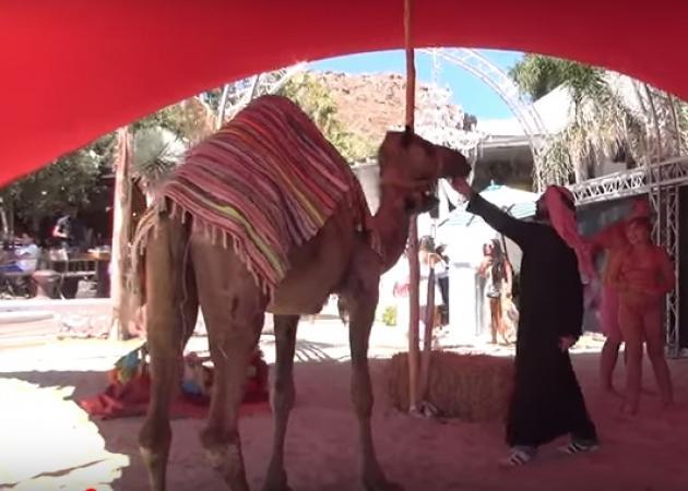 Oι καμήλες έφθασαν στη Μύκονο για τη συναυλία του Αντώνη Ρέμου! video | tlife.gr