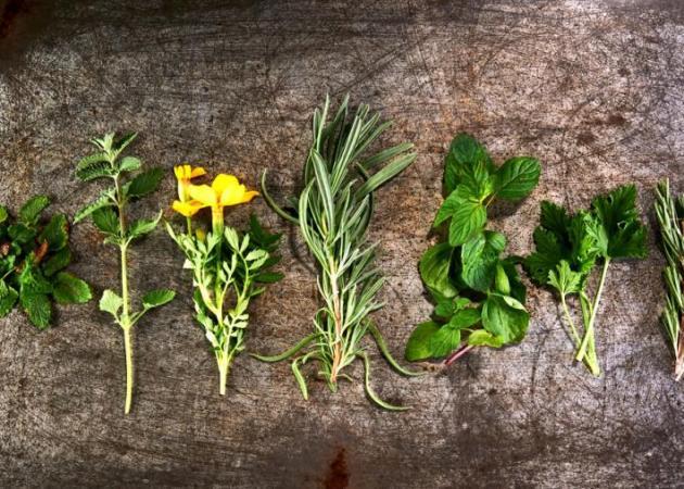 Κουνούπια: Αυτό είναι το φυτό που απωθεί φυσικά τα κουνούπια – Κοίτα τι κάνει! | tlife.gr