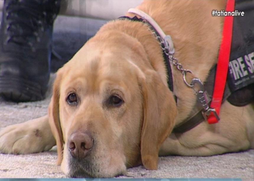 Ο σκύλος της ΕΜΑΚ που εντόπισε την ερημική παραλία με την 44χρονη Ειρήνη στην Tatiana Live | tlife.gr