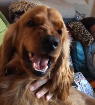 Ο σκύλος του Άρη Καβατζίκη κάνει…αγριάδες στην Χριστίνα Πολίτη! Απολαυστικά βίντεο | tlife.gr