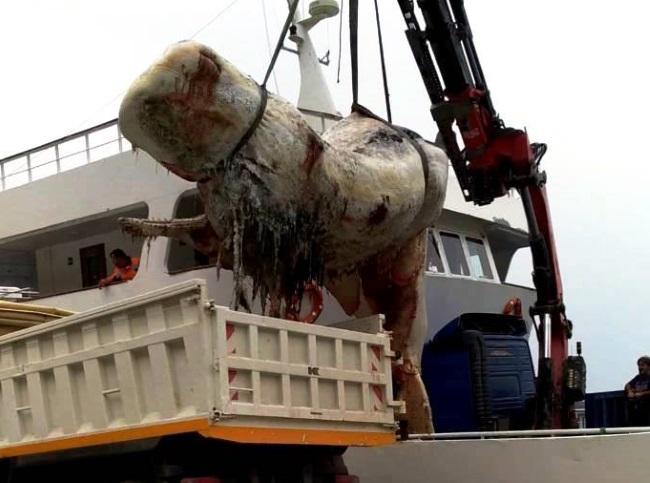 Σαντορίνη: Άνοιξαν το στομάχι της τεράστιας φάλαινας και προσπαθούσαν να πιστέψουν στα μάτια τους [pics, vid] | tlife.gr