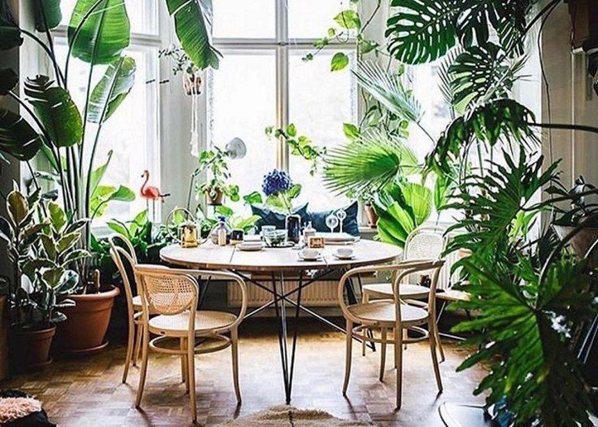 Φυτά για αρχάριους: Ποια είναι τα πιο ανθεκτικά και κατάλληλα για εσωτερικούς χώρους | tlife.gr