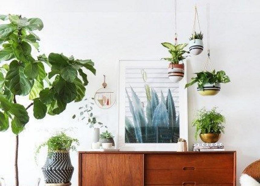 Φυτά εσωτερικού χώρου: Σύντομος οδηγός για τα πιο εντυπωσιακά κρεμαστά φυτά! | tlife.gr