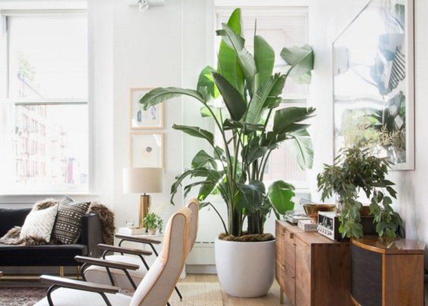Πουλί του Παραδείσου: Πώς να φροντίσεις το πιο εντυπωσιακό φυτό του interior design! | tlife.gr