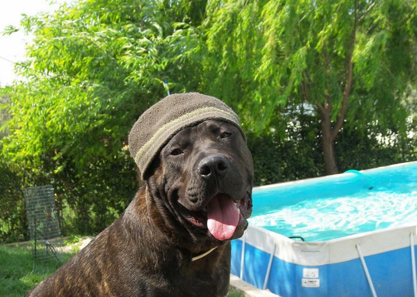 Ι LOVE DOGS. Η πανσιόν σκύλων στα βόρεια προάστια, που κάνει τη φύλαξη των σκύλων να μην μοιάζει με τιμωρία, αλλά με ανταμοιβή!