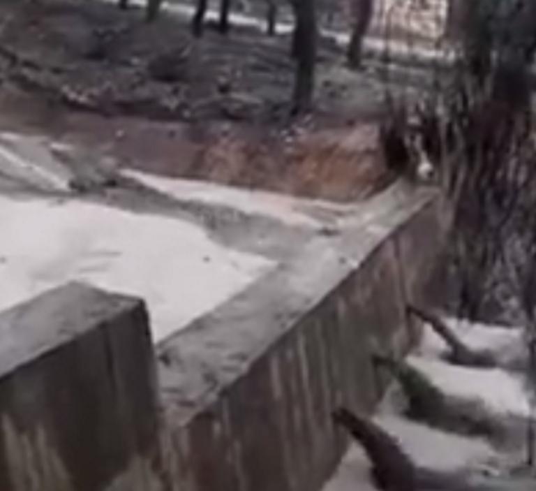 Αγωνία στο Μάτι – Μετά την πυρκαγιά οι κάτοικοι τρέμουν τα φουσκωμένα ρέματα – video | tlife.gr